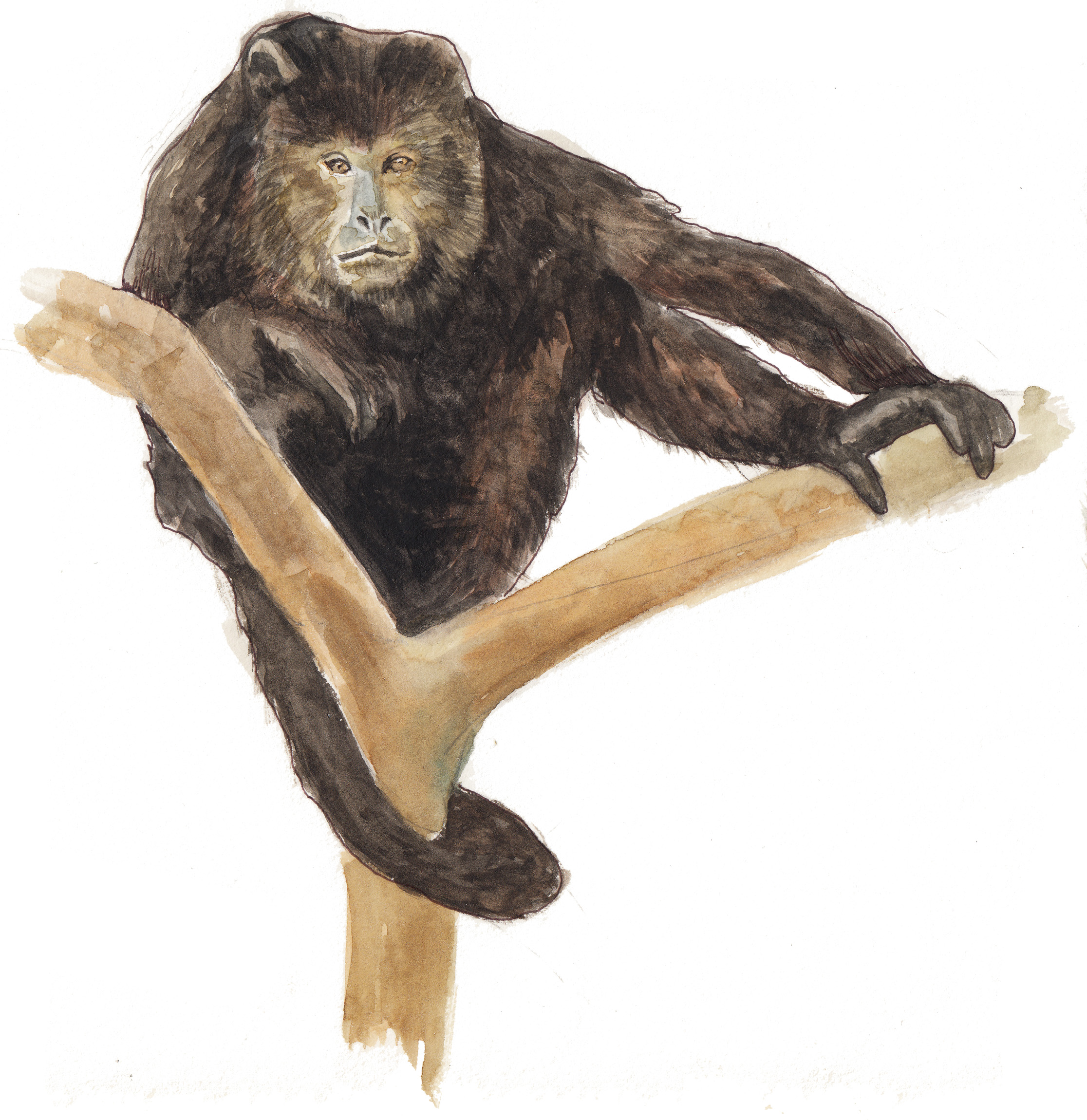 howlermonkey  ,watercolor painting