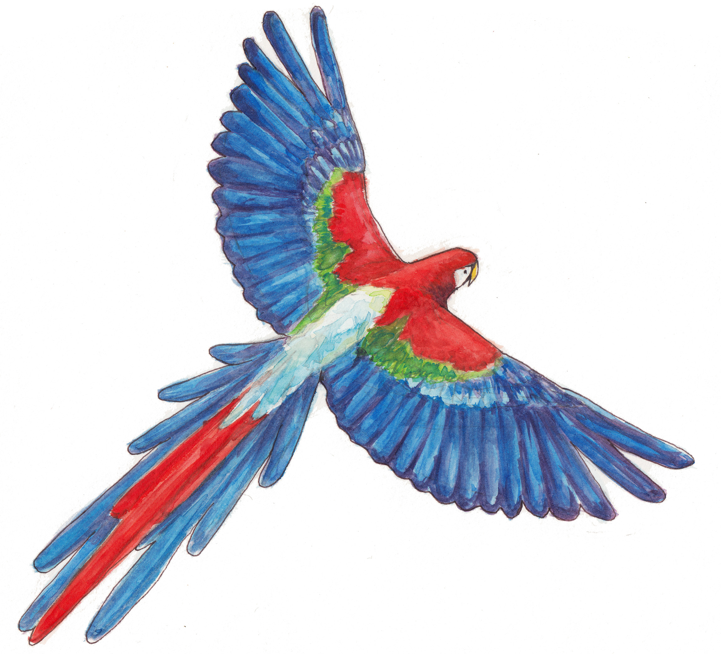 macaw  ,watercolor painting